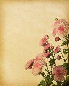 vintage paper textures with pink chrysanthemum