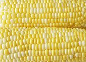 stock photo of sweet-corn  - Fresh Bi - JPG