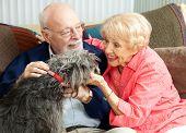 Senior pareja en casa en el sofá, jugando con su perro de raza mixta adorable.