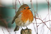 Robin on post.