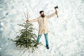 Merry Christmas And Happy Holidays. Christmas Tree Cut. Man Lumberman With Christmas Tree In Winter  poster