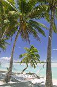 Tropical Dream Beach Paradise Hammock Under Palm Trees