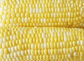 pic of sweet-corn  - Fresh Bi - JPG