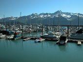Resurrection Bay - Seward, Alaska 1