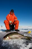stock photo of ice fishing  - Ice fisherman with a large rainbow trout on the ice - JPG