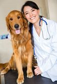 stock photo of vet  - Cute dog at the vet with a happy doctor - JPG
