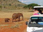 Safari für Touristen bewundern die wilden Tiere in der afrikanischen Savanne