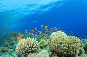Coral Reef and Tropical Fish underwater in Red Sea