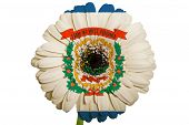 Gerbera Daisy Flower In Colors Flag Of American State Of West Virginia   On White Background As Conc