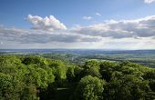 Views Of The Taunus Forest