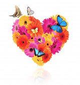 Постер, плакат: Символ сердце из Гербера Цветет с бабочками