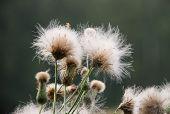 Fluffy Plant