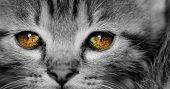 image of yellow tabby  - Close - JPG
