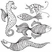 Fish Selction