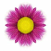 Purple Kaleidoscopic Daisy Flower Mandala Isolated On White