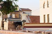 Dog On The Roof