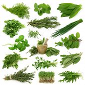 foto of bundle  - Fresh herbs collection isolated on white background - JPG