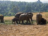 Herd Of Elephants At The Orphanage