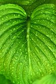 Raindrops On Green Plant Leaf