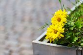 Beautiful Yellow Flowers On A Bokeh Background