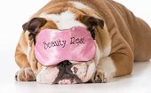 english bulldog wearing beauty rest eye mask sleeping