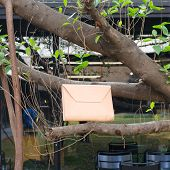 Leather Bags On Banyan Branch