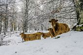 animals in the forest in winter on the way to San Miguel