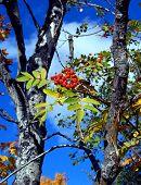 Berries In Autumn