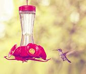 a cute hummingbird hovering at a nectar feeder done with a retro vintage instagram filter