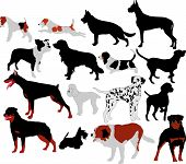 stock photo of foxhound  - dogs collection vector silhouettes domestic animals pets - JPG