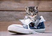 Kitten Is Sitting In A Shoe
