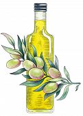 Olive Oil. Watercolor Illustration