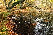 Autumn colors in Plitvice National Park, Croatia, Europe