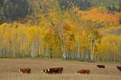 Fall, Colorado