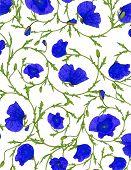 blue poppy flower ornamental background