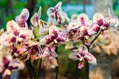 pic of orquidea  - A beautiful orchid in the room interior - JPG