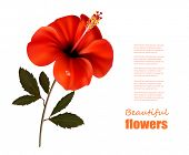 Beautiful red flower background with space for your text. Vector.