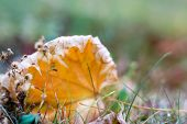 close-up photo of colorful autumn maple leaves. soft focus