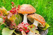 Autumn Toadstool