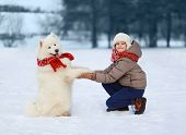 Happy Teenager Boy Playing With White Samoyed Dog