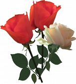 illustration with rose flowers isolated on white background