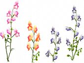 illustration with group of wild flowers isolated on white background
