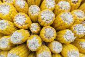 Image Of Yellow Corn Background