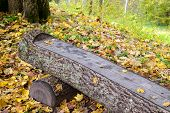 wooden bench in the park
