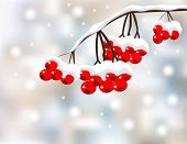 Winter background with red berries and snow