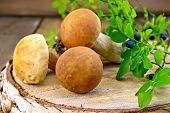 Ceps with blueberries on birch billet