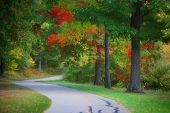 Beautiful bike trail through autumn trees in Michigan