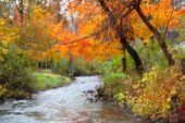 Running water through autumn trees
