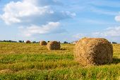 pic of haystacks  - Haystacks in the field at sunny day - JPG