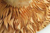 Close up of mushroom (macro)